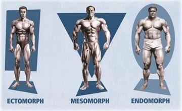 بهترین نوع تیپ بدنی برای بدنسازی کدام است؟