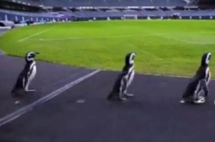 ویدیو  مهمانهای ناخوانده در ورزشگاهی در شیکاگو آمریکا