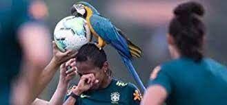 ببینید  حضور طوطی در تمرینات تیم ملی فوتبال بانوان برزیل
