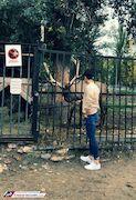 عکس  سردار بیتوجه در باغوحش