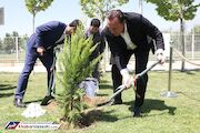 عکس| برگ همه درختان ایران از این آگهی ریخت!