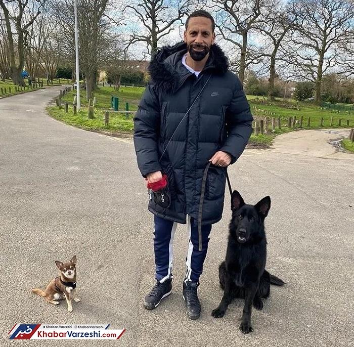 استخدام سگ توسط بازیکنان لیگ برتری برای محافظت از جان؛ جزیره سگها!